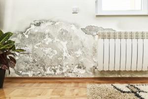 Schimmel und Feuchtigkeit auf Wand